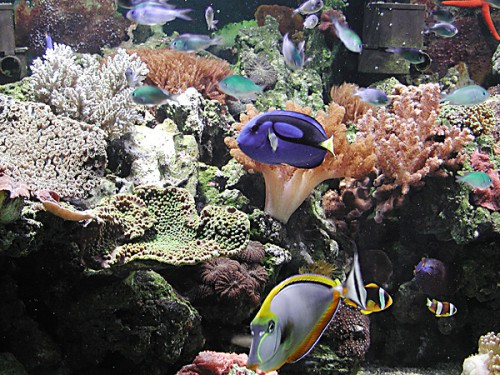 Ecosistema acquario - scorcio