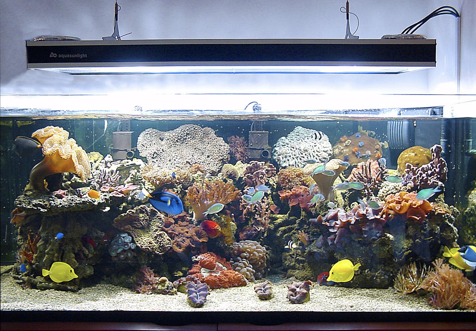 Illuminazione in un acquario marino for Cerco acquario per tartarughe usato