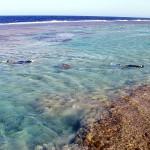 Due appassionati di snorkeling esplorano la laguna corallina. In questa zona l'acqua non supera mai il metro e mezzo.