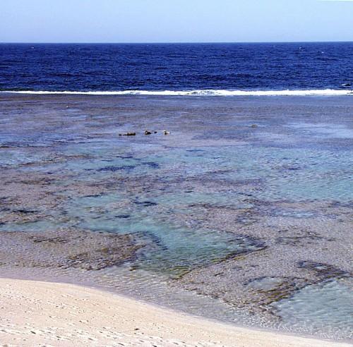 Nuotare con maschera e pinne - El Quseir - La laguna corallina