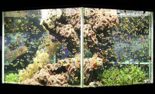 Posizionamento di un acquario marino - Acquario di Monaco