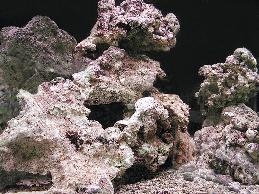 Rocce vive in un acquario marino