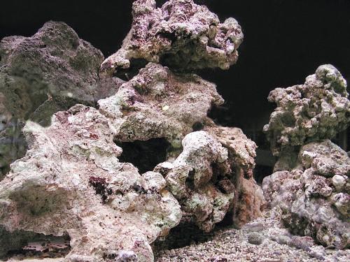 Le rocce vive, cuore dell'acquario di barriera