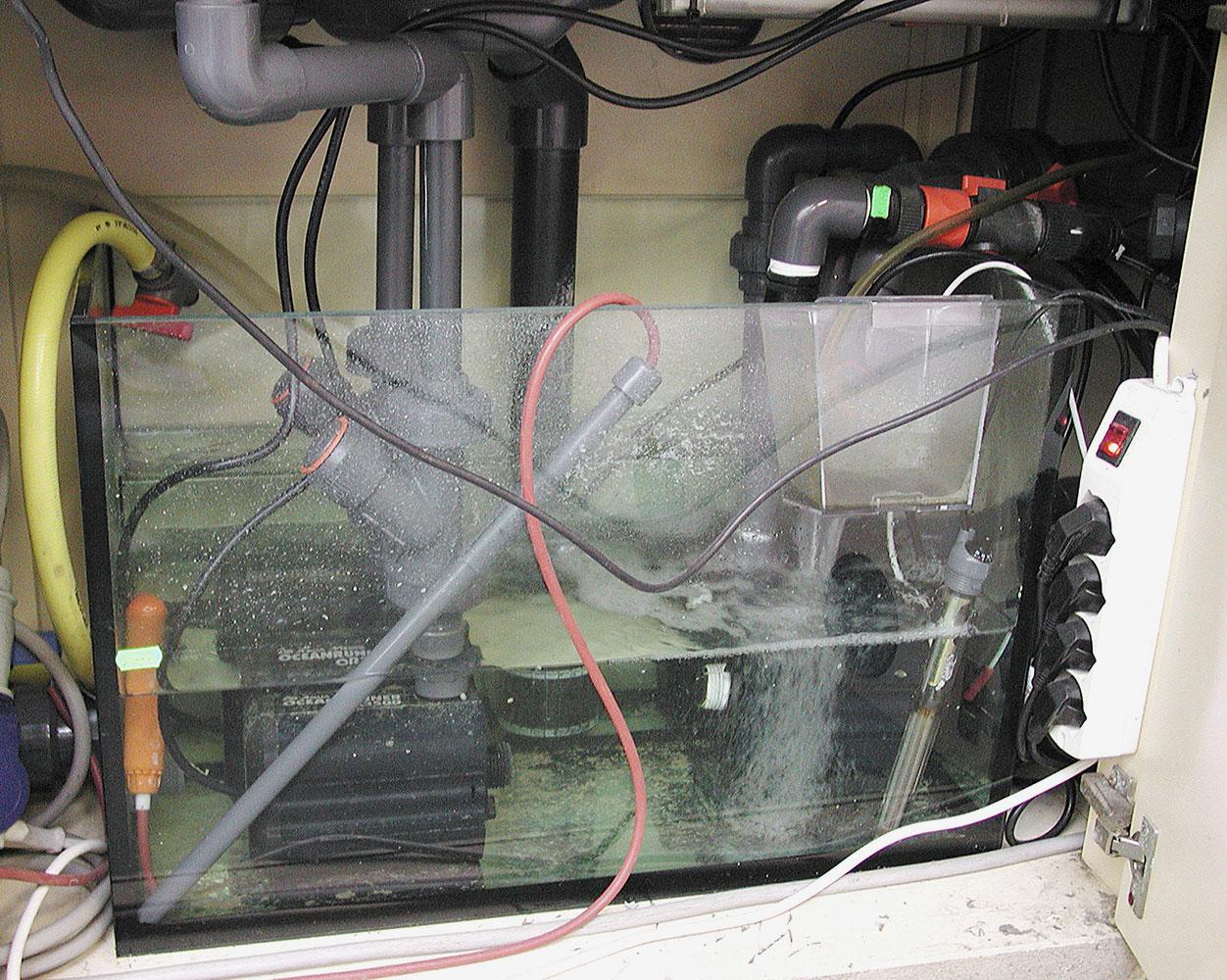 Sump di un acquario marino for Filtro vasca pesci