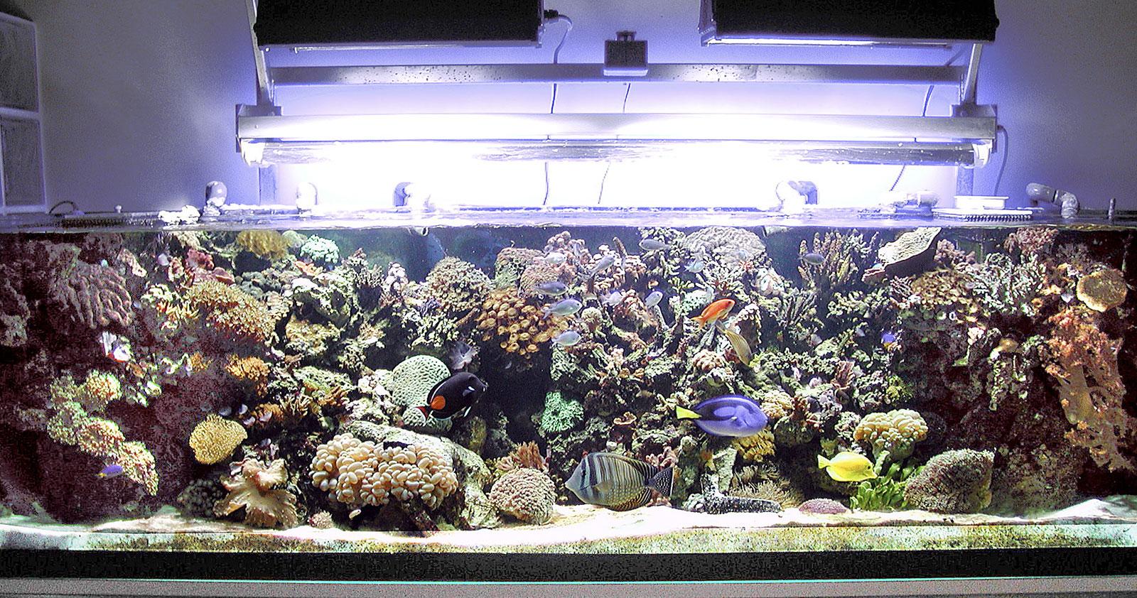 Architettura e dimensioni di un acquario marino for Acquario marino 300 litri prezzo