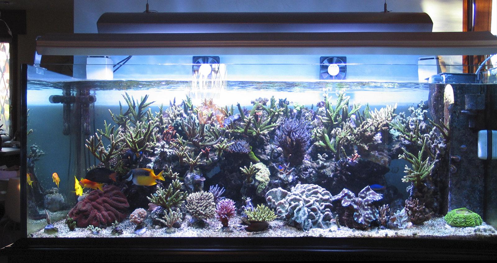 Posizionamento di un acquario marino for Vasca per tartarughe grandi