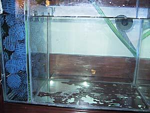 Miracle Mud - la vaschetta riempita d'acqua