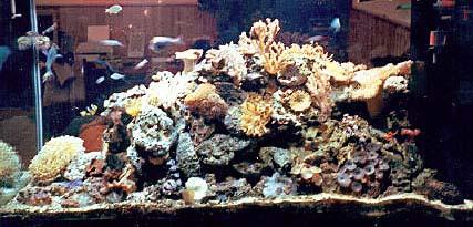 Storia di acquariofilo - Acquario esploso