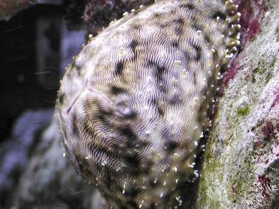 Imprevedibili predatori di invertebrati