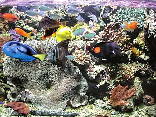 Storia di acquariofilo - Fauna mista