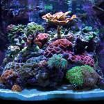 Nano-reef