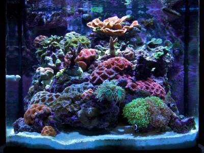 Nano-reef una sfida possibile