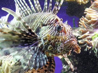 Pericoli in acquario