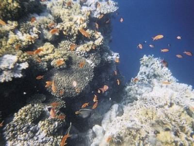 Ecosistema reef